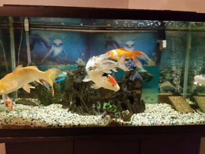 We're selling our 90 gallon Fish tank and stand for sale