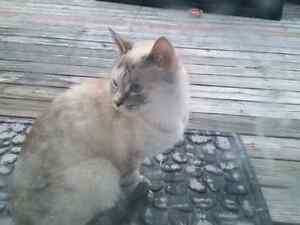 Found - small possibly female cat