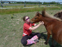 2 yr old Miniature Filly Kawartha Lakes Peterborough Area Preview