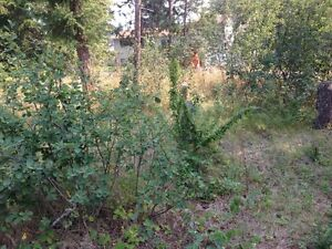463 Oriole Way - Treed Building Lot