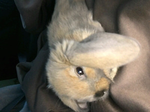 Looking for the person who gave me this bunny!