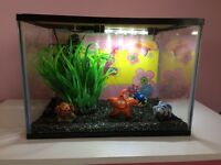 """Small fish tank 16""""x 10""""x 11"""""""
