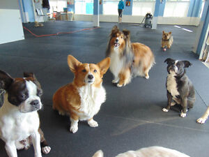 Doggy Daycare for Small Dogs, Puppies, and Shy Dogs