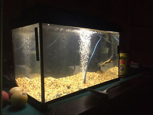 Free or cheap fish tanks/aquariums