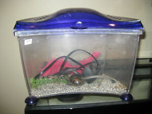 Curved front betta tank Kitchener / Waterloo Kitchener Area image 1