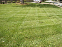 Can You Mow and Trim Lawns?