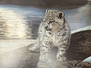 Watchful Eye - Snow Leopard - Terry Isaac Strathcona County Edmonton Area image 3