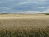 spring seeding? 90 cultivated acres for rent