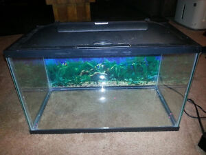 10 gallon LED light fish tank and accessories