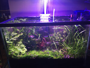 Planted aquarium with stand. It's a shrimp and endlers