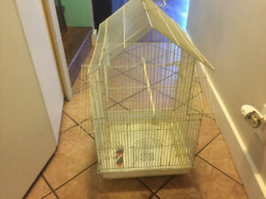 Bird and  cage for sale