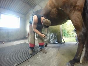 Professional Farrier Services  Cornwall Ontario image 2