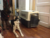 Dog Crate - travel ready