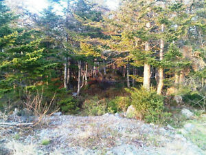 Old Track Road - Spaniards Bay, NL - MLS# 1127713 St. John's Newfoundland image 2