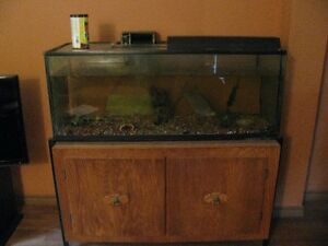 Aquarium with fish and everything included, free