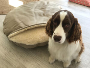 BRAND NEW Snoozer Cozy Cave Dog Bed