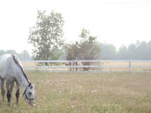 Horse boarding available at private farm