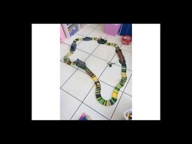 Dino cars race track and 3 cars