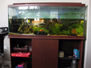 55 gallon tank with 5 fish