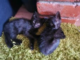 2 little boys kittens for sale in Boston. Ready now