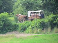 Horse drawn Sleigh/wagon rides