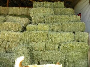 timothy hay square bales for sale no rain