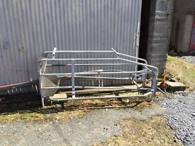 Sow farrowing crate pig, gilt, grower
