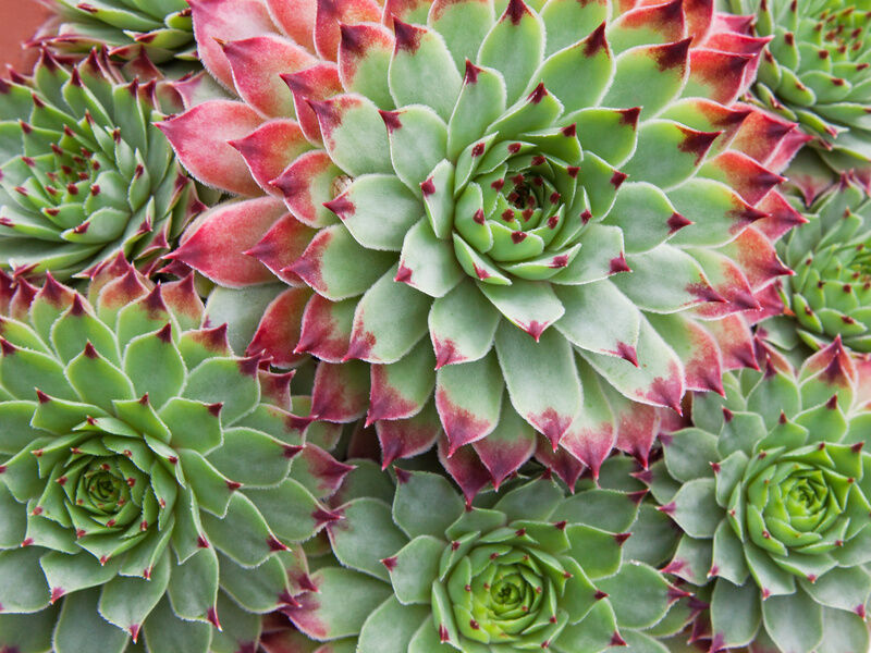 How To Grow Succulents From Clippings Ebay