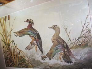"A. Sakhavarz, ""Ducks Unlimited Canada Edition"" Kingston Kingston Area image 1"