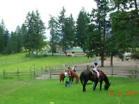 Pastoral Horse boarding in Peachland