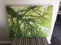 3 x Assorted Next Canvas Pictures