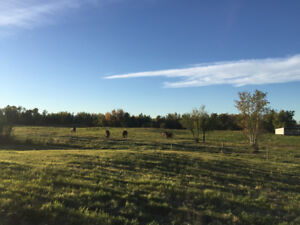 Pasture Board 10 min East of Sherwood Park