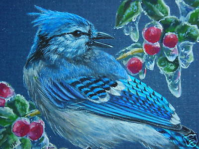 ACEO  Blue Jay bird Berry wildlife Winter print