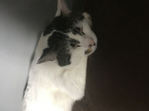 Free cat to good home