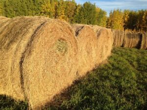 Large Round Bales Horse Quality Hay
