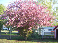 BOOK YOUR YARD CLEAN UPS  AND SUMMER PROJECTS NOW