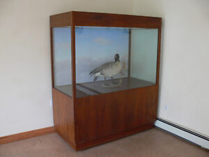 Three large display cabinets for sale