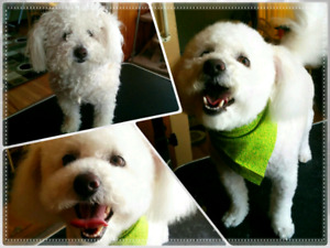 Grooming find or advertise pet animal services in calgary home based dog grooming inner city ne solutioingenieria Images
