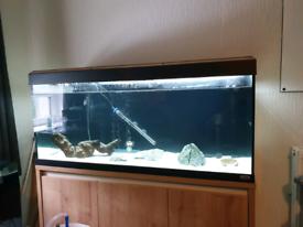 Fluval roma 240l fish tank