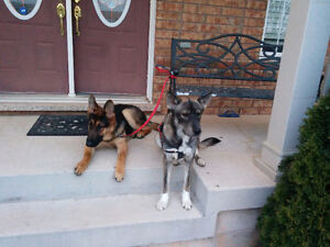 Two puppies for sale