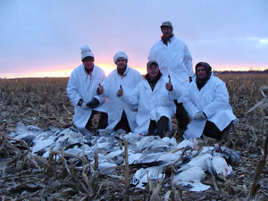 Goose hunt guided snowgeese