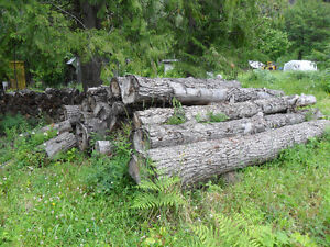 U cut /U load logs for sale ....poplar /cottenwood  wood