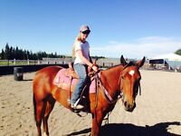 4 year old quarter horse mare