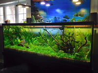 ENTRETIEN INSTALLATION REPARATION DESIGN: AQUARIUM CLEANING