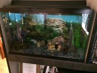 Tank + Fish + Assessories as Pictured !!!