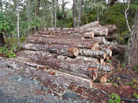 One year old logs for firewood