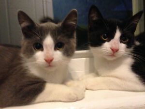 True Rescues - 2 kittens & mom - ALREADY SPAYED/VACC/ETC