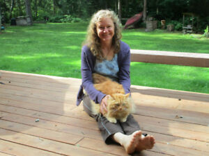 Experienced Housesitter for cats