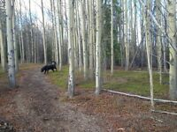 looking for Land / Acreage
