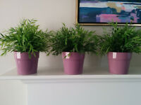 3 Artificial potted plants, House bamboo